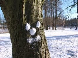 snow-tree-image